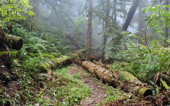 Заставка туман, лес на рабочий стол бесплатно