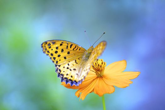 Фото бесплатно бабочка, цветок, макро