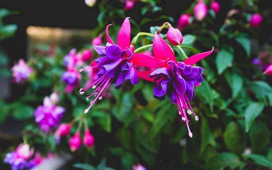 Фото бесплатно кустарник, цветочки, лепестки