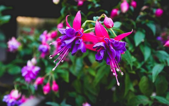 Photo free bush, flowers, petals