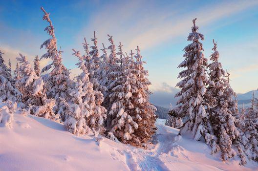 Заставка деревья, пейзаж на монитор