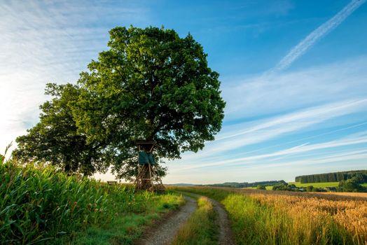 Фото бесплатно дорога, лето, деревенская дорога