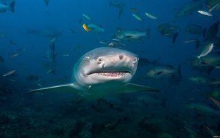 Фото бесплатно акула, морда, пасть, зубы, плавники, рыбы