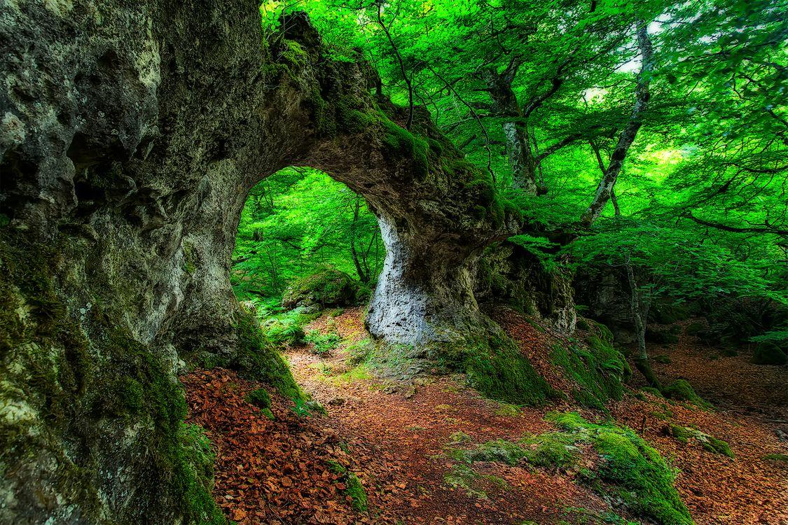 Фото бесплатно лес, деревья, скала - на рабочий стол