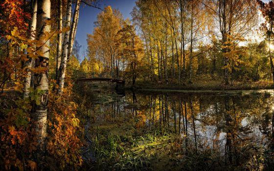Заставки осень,река,водоросли,трава,деревья,березы