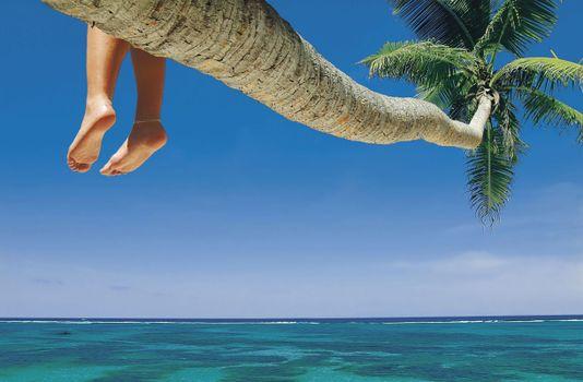 Фото бесплатно пальма, ноги, океан