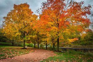 Бесплатные фото осень,парк,дорога,река,мост,деревья,пейзаж