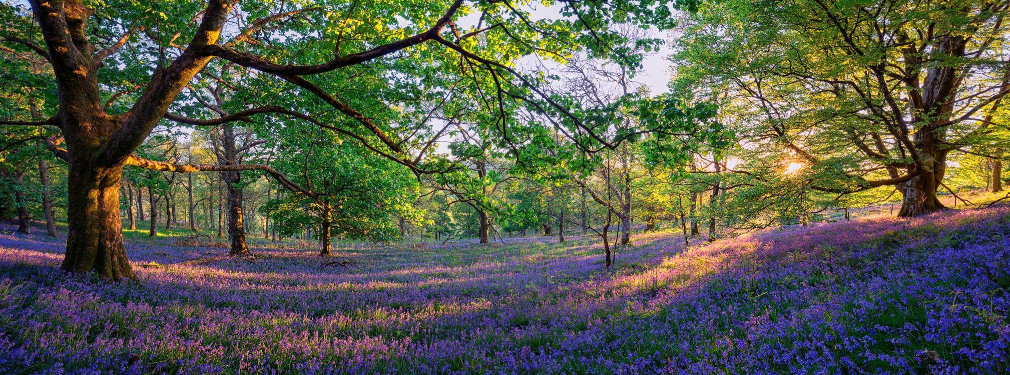 Обои Trossachs, Шотландия, лес, деревья, поляна, цветы, панорама на телефон | картинки пейзажи