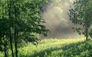 Фото бесплатно лес, деревья, поляна, трава, дымка, солнце, свет