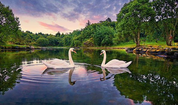 Photo free Norway, lake, trees