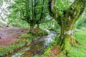Фото бесплатно Испания, река, лес