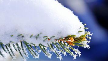 Фото бесплатно снег, елка, мороз, снежинки