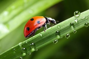 Photo free ladybugs, sun, water