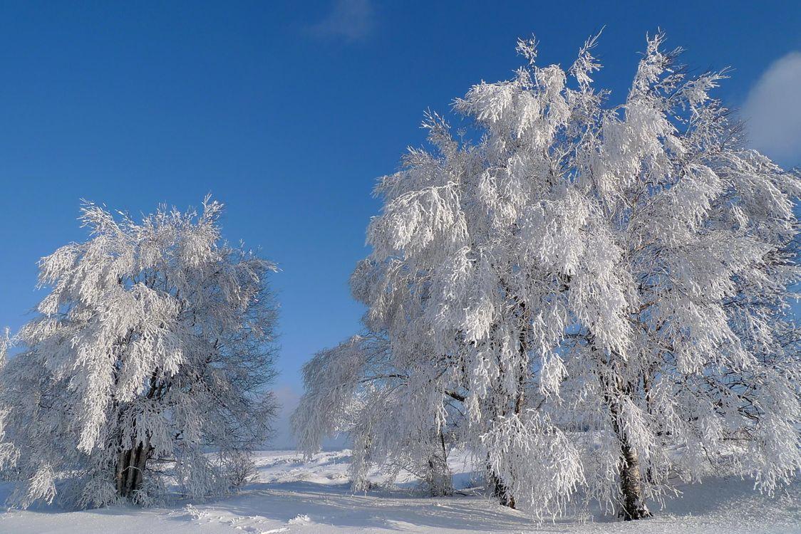 Фото бесплатно зима, снег, деревья, пейзаж, пейзажи