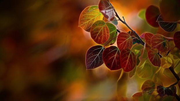 Заставки листья, осень, разноцветные