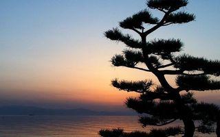 Бесплатные фото сосна,море,горизонт,горы,небо,закат