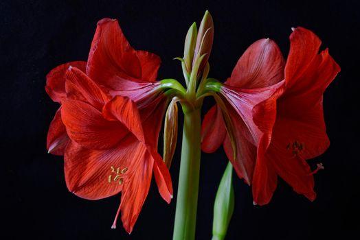 Красивые фотографии на тему флора, цветок