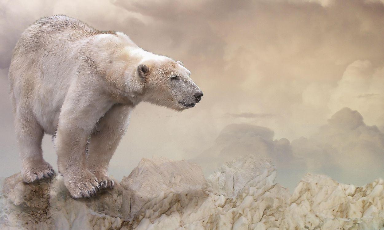 Фото бесплатно белый медведь, полярный медведь, арт, рендеринг