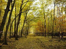 Бесплатные фото парк,деревья,тропа,осень,листопад