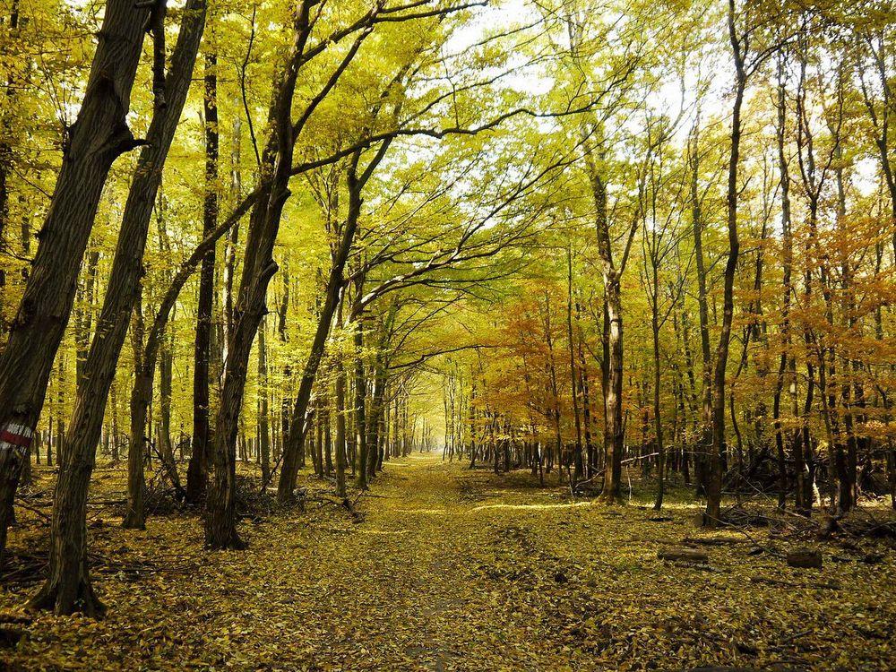 Фото бесплатно парк, деревья, тропа, осень, листопад, природа - скачать на рабочий стол