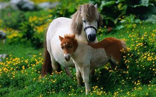 Photo free pony, horse, foal