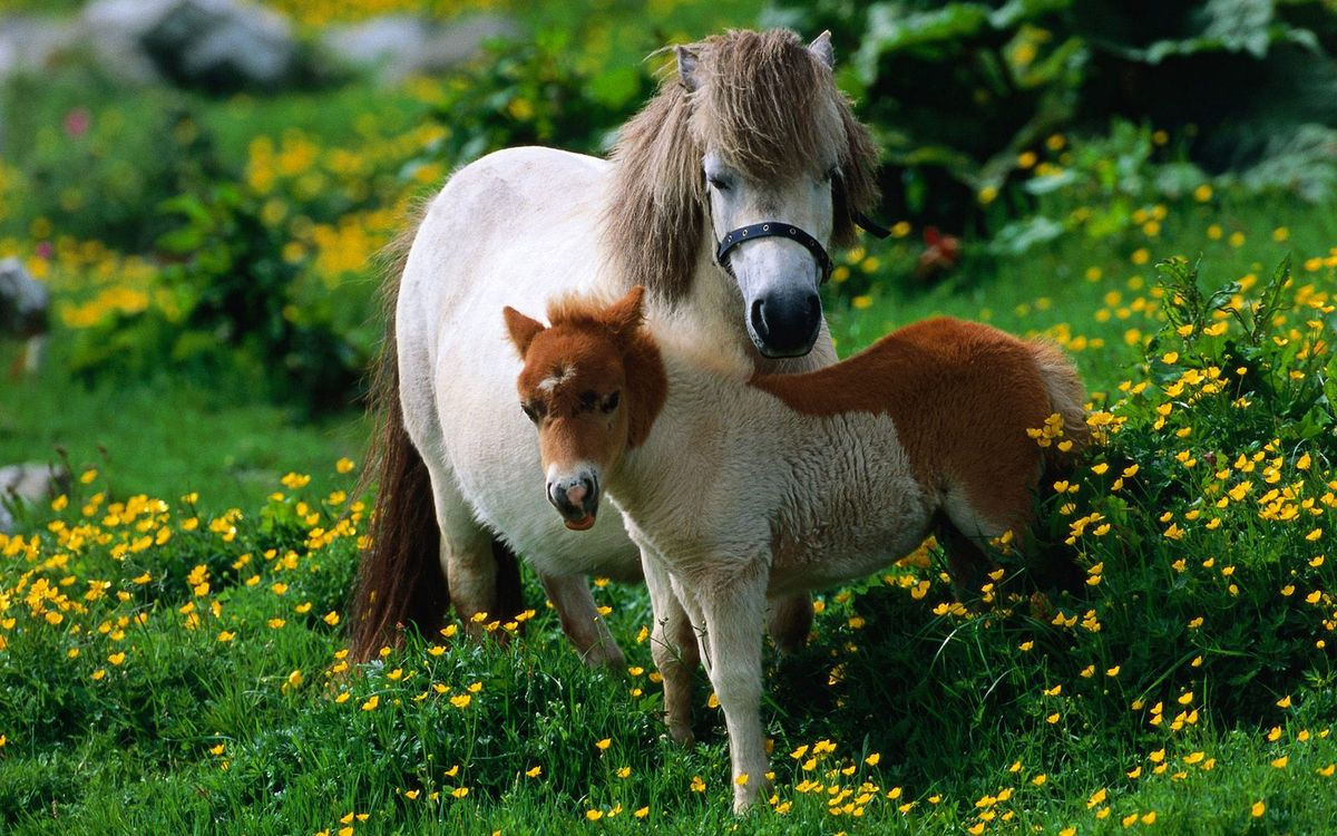 Free photo pony, horse, foal - to desktop