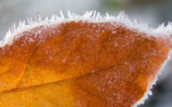 Фото бесплатно вены, мороз, жёлтый