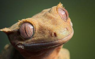 Фото бесплатно ящерица, желтая, морда