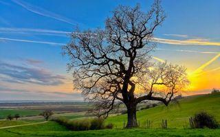 Фото бесплатно холмы, трава, кустарник