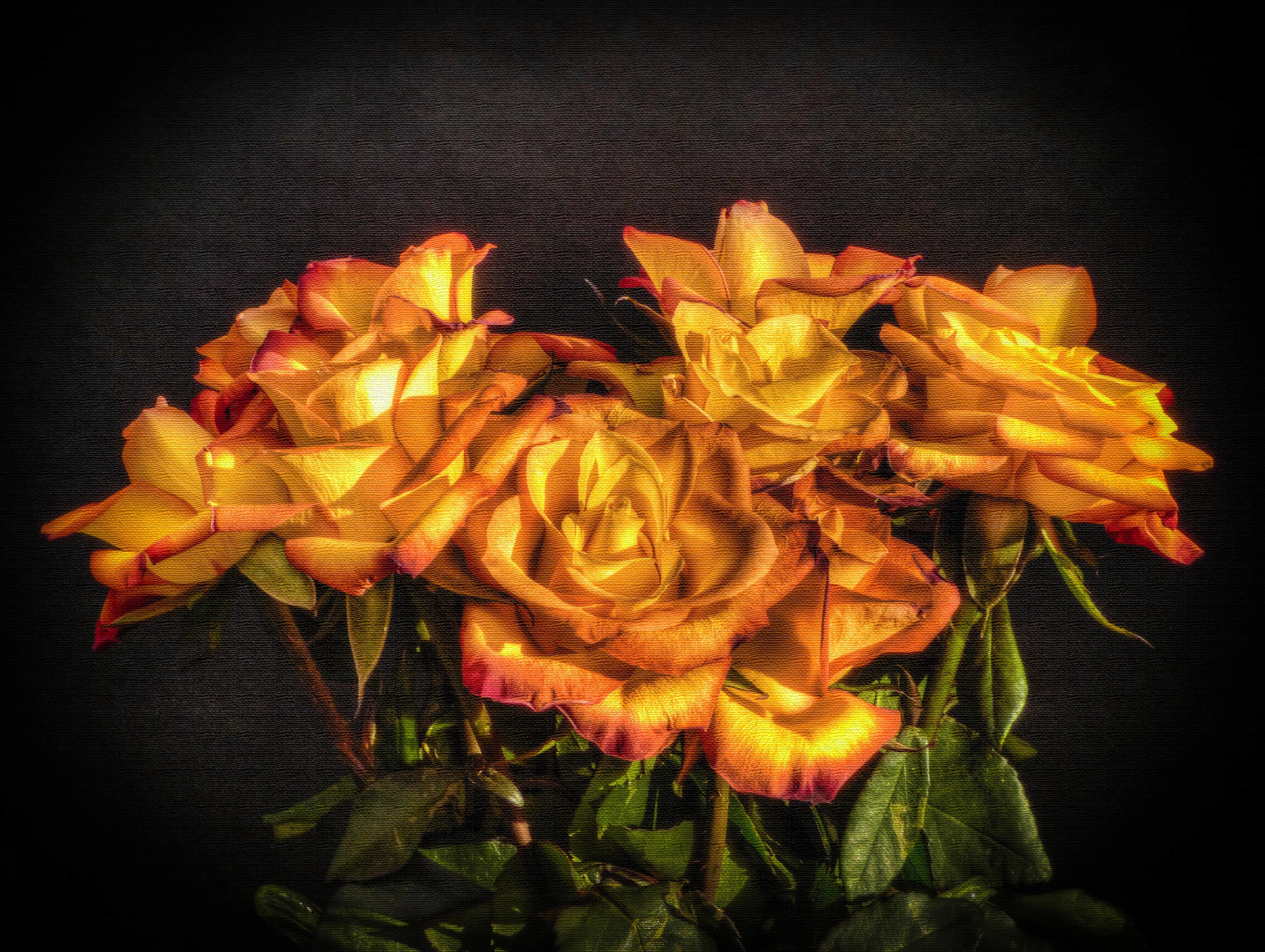 Обои полотно, розы, цветы, флора