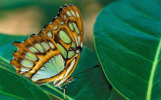 Заставки бабочка, узор, зеленый