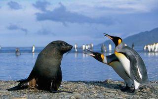 Бесплатные фото морской котик,черный,морда,ласты,пингвины,клювы,камни