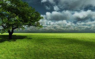Фото бесплатно поле, трава, зеленая, дерево, крона, горизонт, небо, облака