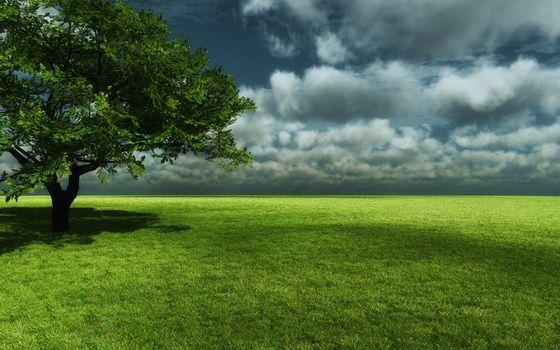Бесплатные фото поле,трава,зеленая,дерево,крона,горизонт,небо,облака