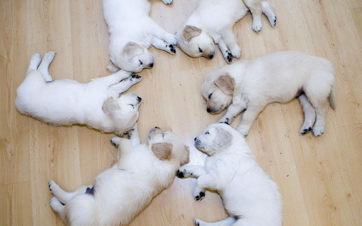 Фото бесплатно щенки, спят, морды, лапы, хвосты, шерсть - на рабочий стол