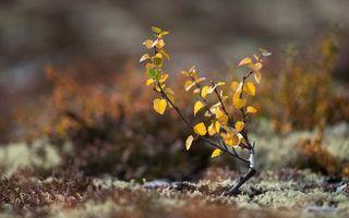 Фото бесплатно ветка, желтые листья, трава
