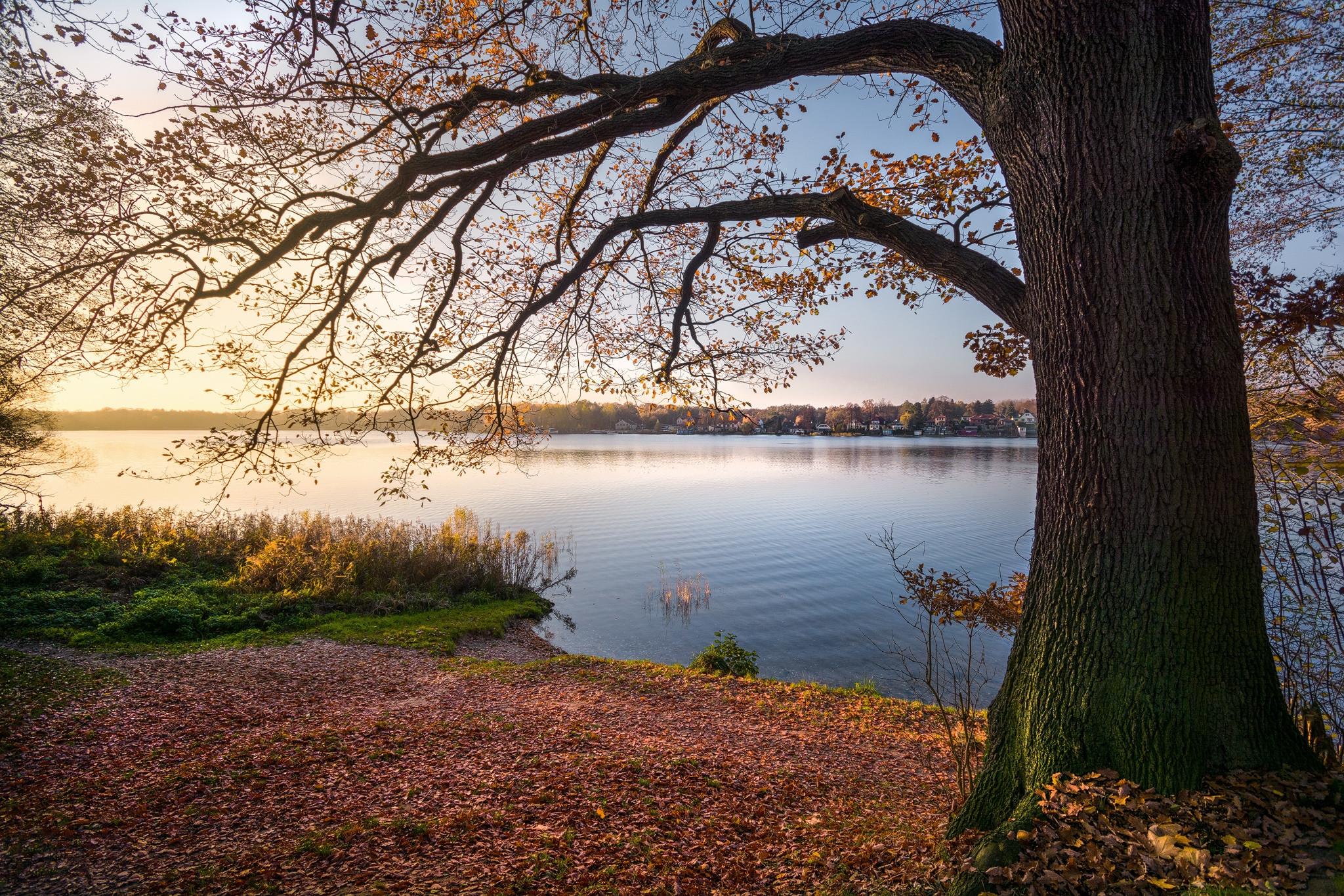 обои закат, озеро, дерево, пейзаж картинки фото