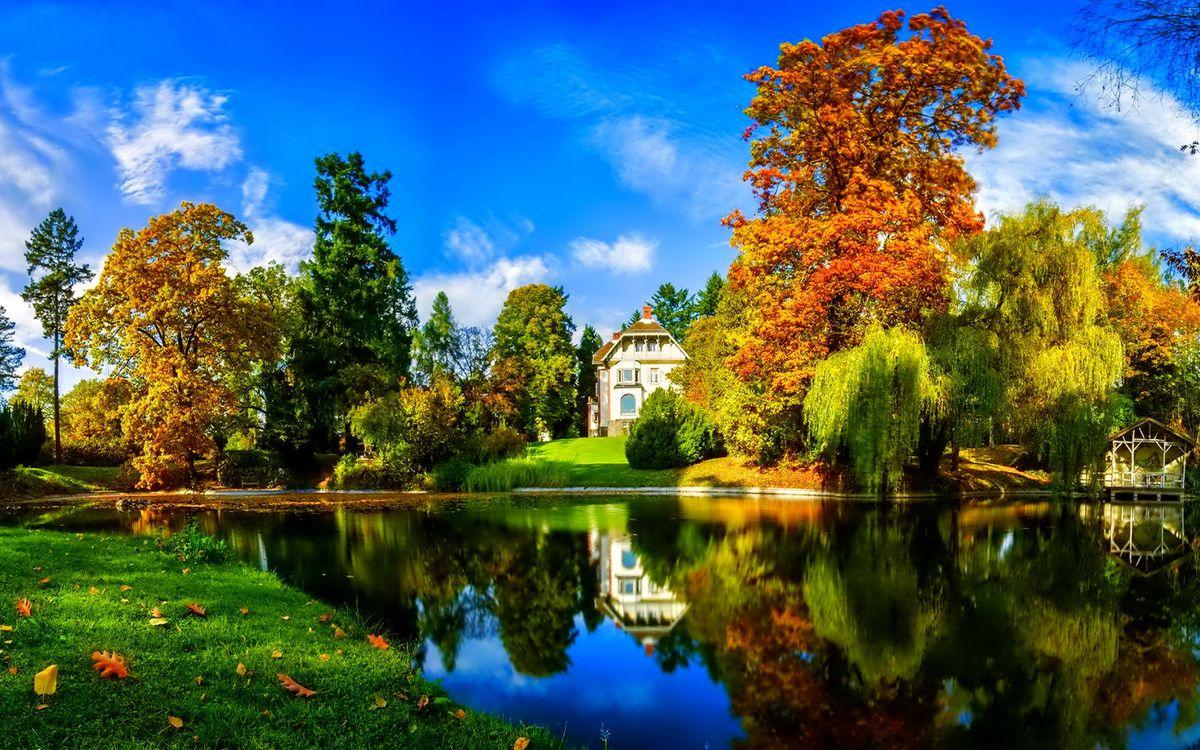 Free photo autumn, lake, reflection, grass, trees, foliage, color - to desktop