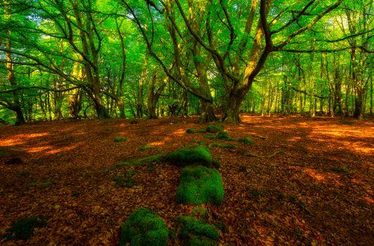 Заставки Шотландия, лес, деревья