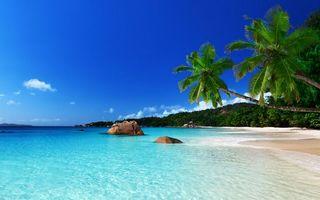 Фото бесплатно тропики, пальмы, растительность