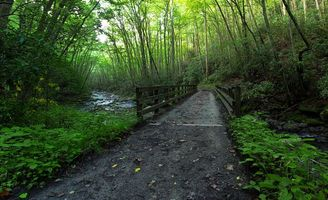 Заставки лес, деревья, мост