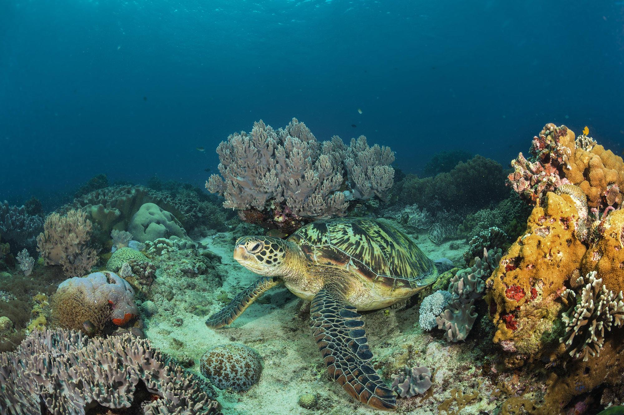Обои море, морское дно, черепаха, подводный мир