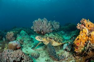 Бесплатные фото море, морское дно, черепаха, подводный мир