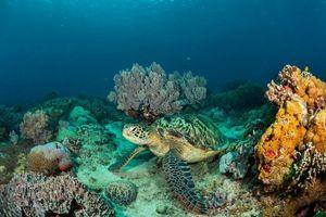 Заставки море, морское дно, черепаха