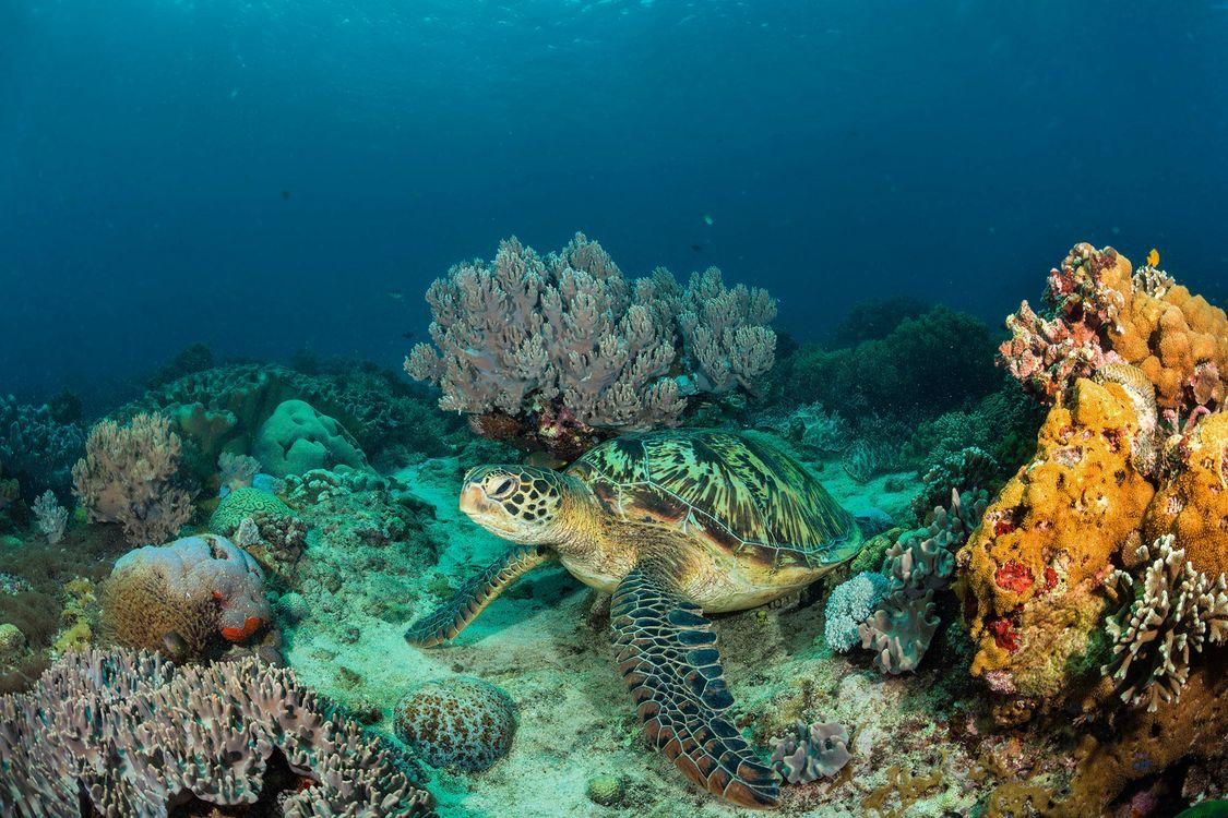 Обои море, морское дно, черепаха, подводный мир картинки на телефон