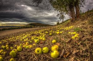 Обои осень, поле, пашня, яблоки, деревья, пейзаж