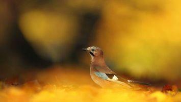 Бесплатные фото птичка,клюв,крылья,хвост,перья,окрас