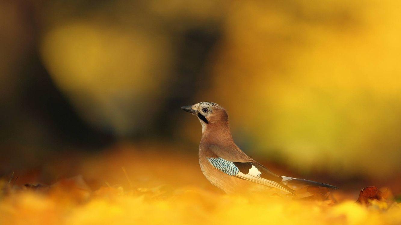 Фото бесплатно птичка, клюв, крылья, хвост, перья, окрас, птицы