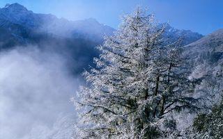 Бесплатные фото зима,горы,вершины,снег,деревья,иней,дымка