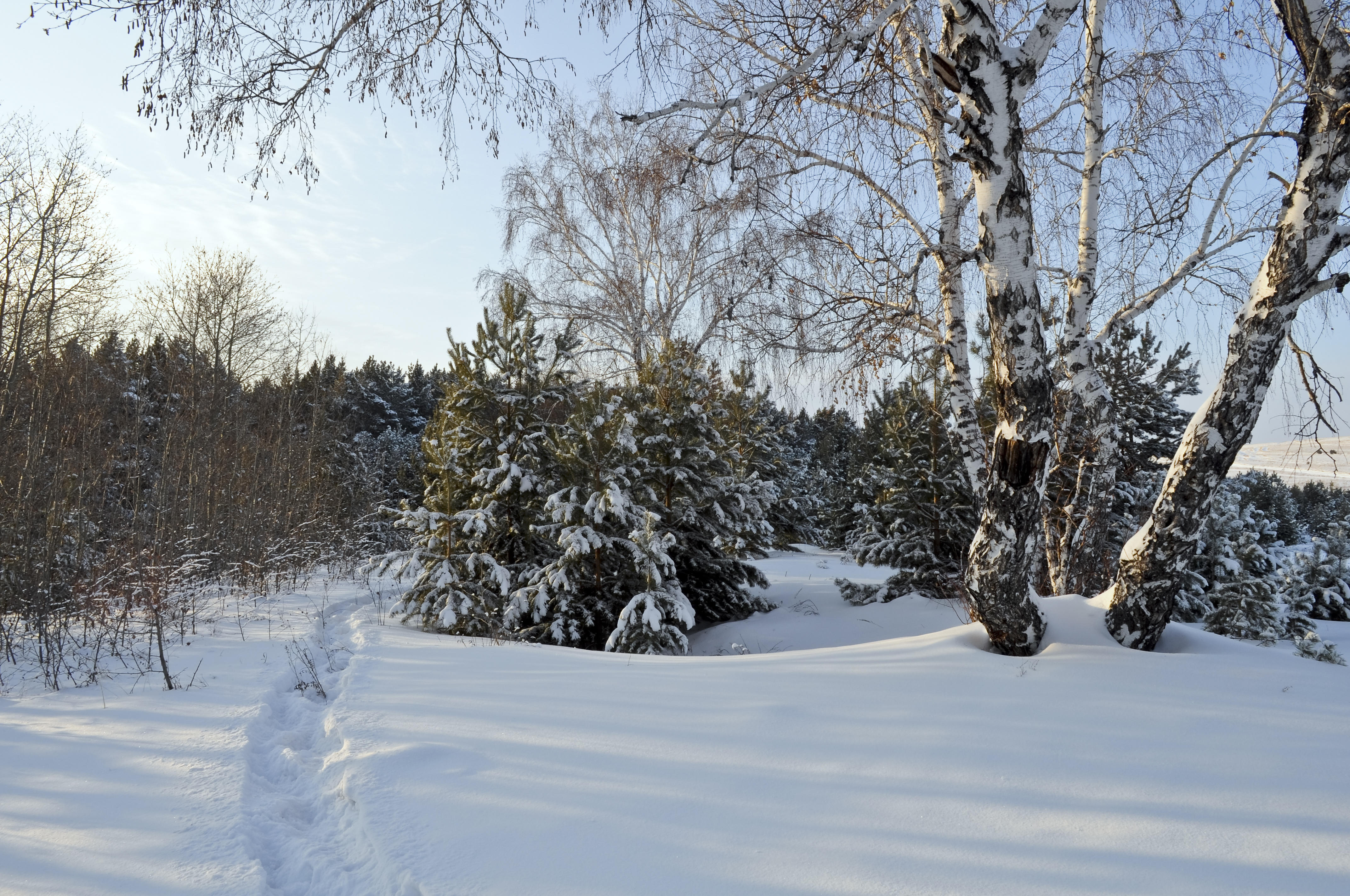 Обои зима, снег, деревья, сугробы
